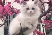 고양이를 닮은 '희귀한 새'를 보셨나요?