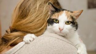 '부모님이 내 고양이를 내다 버렸다'
