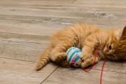누워서 뒷발 차는 고양이, 살 빼는 중인가요?