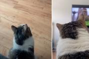 온종일 TV만 보는 고양이 엘라의 취미