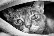 흑백의 세상에서 다시 만난 고양이들