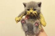 식사 예절교육이 필요한 아기 고양이들