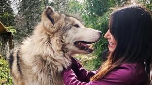 동물원과는 다르다! 늑대 보호소에 호평이 쏟아지는 이유
