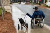 나란히 휠체어에 탄 댕댕이와 남성 '우리 함께 행복하자'