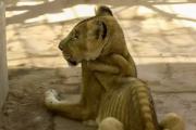사자를 굶어 죽인 동물원 '돈이 없어서'