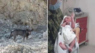 아기를 구하고 필리핀 영웅 대접받는 댕댕이 '진정한 스타'