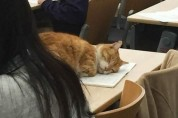 '아 몰랑' 심각하게 눈치 없는 고양이들