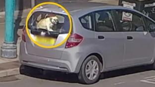 '빌어먹을! 차 안에 개 좀 두지 말라고요!'