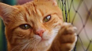 영국, 사상 최악의 '고양이 사태'가 찾아온다