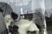 화낼 때마다 창문 두드리는 고양이 '너 일로 와 봐'