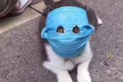 '신종 코로나 때문에' 마스크 쓴 고양이 등장