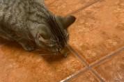 '때가 됐는데' 바닥에서 간식이 솟아난다고 믿는 고양이