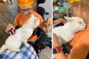 엄마, 이 고양이는 휠체어가 무섭지 않나 봐요!