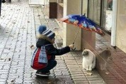 당신의 하루를 행복으로 채워줄 고양이 사진 10장