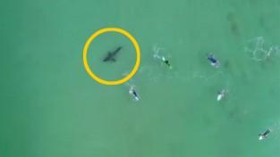 백상어의 출현에도 여유로운 서퍼들 '전혀 몰랐어'