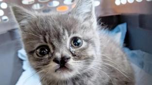 뉴욕 거리에서 랩 실력을 뽐내던 아기 고양이