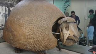 2만 년 전 살았던 갑옷 동물, 인간 땜에 멸종?