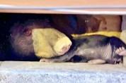 가스가 누수된 지하 창고에서 살던 곰 가족의 결말