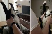 기지개 켤 때마다 원기옥 쏘는 고양이 '만세'