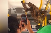 '행복한 기다림' 나무늘보를 위해 멈춘 출근길 버스
