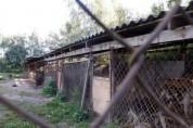리투아니아를 충격에 빠트린 불법 개 농장 사건