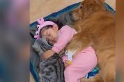 잠든 고양이 옆에 소녀, 그 옆에 댕댕이 '행복한 낮잠'