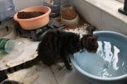 집안에 갇혀 굶어 죽어 가는 우한의 반려동물들