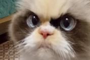 화난 거 아니라고 했다! 화난 표정의 고양이 묘묘
