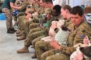 휴가 반납하고 코알라를 돌보는 군인들 사진 '뭉클'