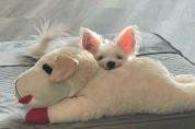 '집사 쵝오' 반려동물이 좋아하는 인형 선물하는 법