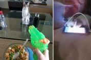'후방 주의' 집사들이 전하는 고양이 뒷담화