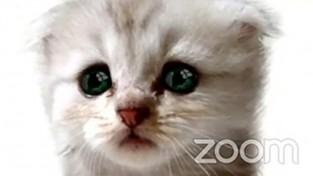 비대면 재판 중 고양이 필터를 킨 변호사