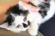 낙엽 속에서 길 잃은 아기 고양이의 고백 '나랑 살래?'