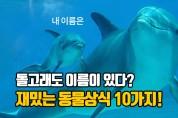 돌고래도 이름이 있다! 짦고 재밌는 동물 상식 10가지 (영상)