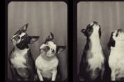행복을 순간포착? 놉! 행복을 담아내는 동물사진관