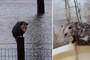 익사하는 동물들을 구하기 위해 '노아의 방주'를 띄운 형제