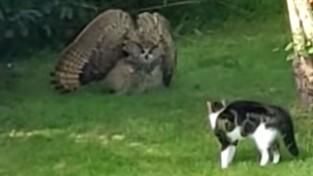 고양이를 위협하는 부엉이 영상 '촬영할 때가 아닌데'