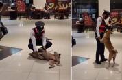 쇼핑몰에 난입한 개를 발견한 경비원 '만져주면 나갈 거야?'