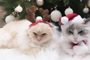 집사 꿀팁! 크리스마스 트리를 고양이로부터 보호하는 법