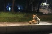 [구조완료]주민에게 사랑받던 개, 11월 1일 안락사 예정