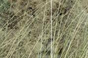 '무엇이 보이나요' 아찔한 올해의 야생동물 사진작 10선