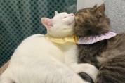 뺨 난타전을 벌이는 고양이판 현실 남매, 미쯔요뜨