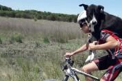 개가 구해야돼! 훈련을 중단한 사이클 선수들