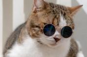 고양이 몸짓으로 보는 심리 상태 (의심의심)