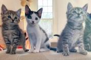 고양이 사남매가 들려주는 해피엔딩 묘생 스토리