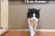 고양이 액체설을 테스트해본 푸식이 집사 '엉덩이는 고체'