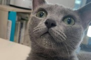 셜록 홈즈와 고양이 깜시의 반전 상황극 '부인 아닌데오'