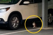 음. 저건 함정이군! 트랩을 멀리서 지켜보던 똑똑한 고양이