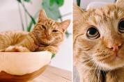 같은 고양이 맞아? 간식을 보자 순식간에 바뀐 표정