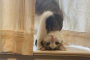 집사들의 지식in '우리 집 고양이 문제 있어요?'